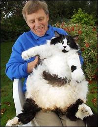 Кошки, тоже нуждаются в мебели (29 фото).  ПОДБОРОЧКА КАРТИНОК (56 фото).